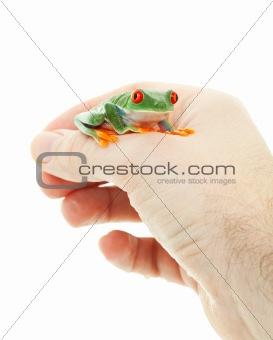 Pet Tree Frog