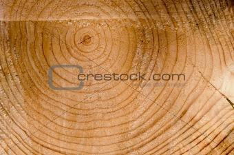 Background cut tree trunk age sign closeup macro