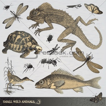 Collection of small wild animals