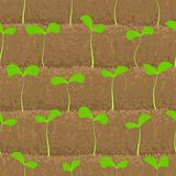 sprout, shoot vegetable patches in row seamless background