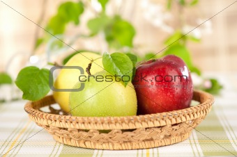 juicy green and red apples in the basket 