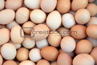 Heap of chicken eggs