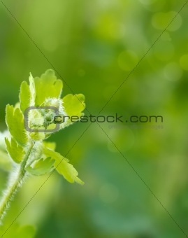 Green spring background with shallow focus