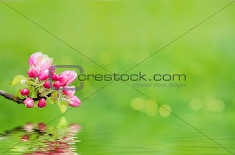 Green spring background with shallow focus and refflection