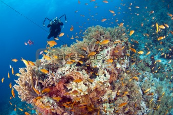 Underwater photographer on a tropical reef