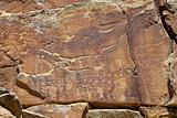 petroglyphs of NIne Mile Canyon