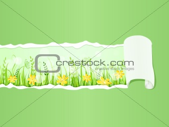 Beautiful Green Grass Meadow under Ripped Paper. Floral Vector Illustration of Grass at Lawn With Blue Sky