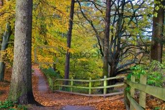 02- Walkway through trees