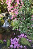 Rhododendron Flowers by Waterfall