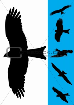 Set of 6 Eagle Vector Illustrations