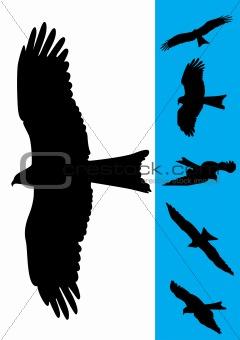 Set of 6 Eagle Vector Illustrations