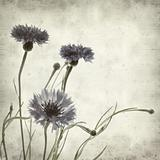 textured old paper background with cornflower