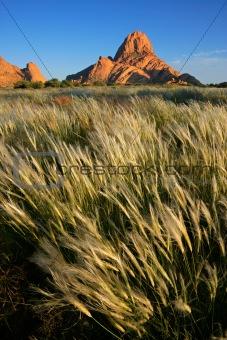 Waving grasses, Namibia