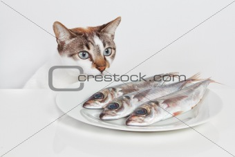 A hungry cat looking at fish in the kitchen.