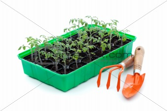 Seedlings and gardening utensils