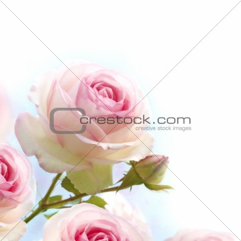 romantic pink roses flowers background