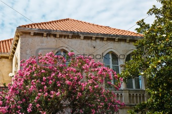 House and Flowers in Dubrovnik, Croatia