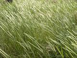 grass in the wood
