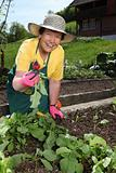 Senior woman gardening