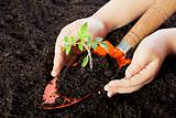 Child hands protecting seedling