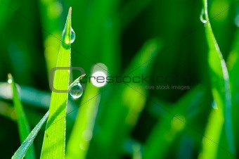 green grass background close up