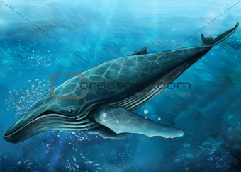undersea - swimming whale 2