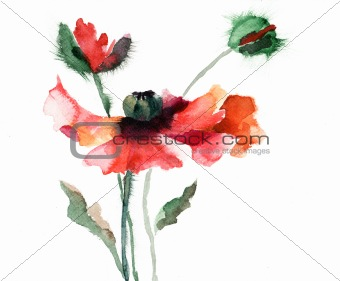 Watercolor illustration of  poppy flower