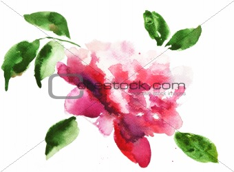 Watercolor illustration of Beautiful peony flowers