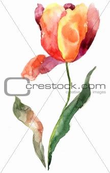Watercolor illustration of Tulip flower