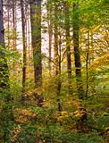 Warm sunrise light breaking through forest trees and canopy