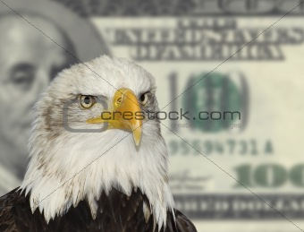 American symbol bald eagle against dollar currency background