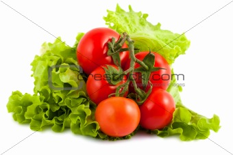 Branch of tomatoes on salad leaf