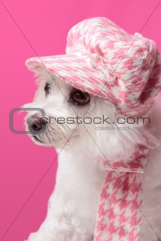 Fluffy dog wearing winter fashion