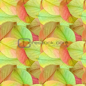 Seamless background of autumn leafs