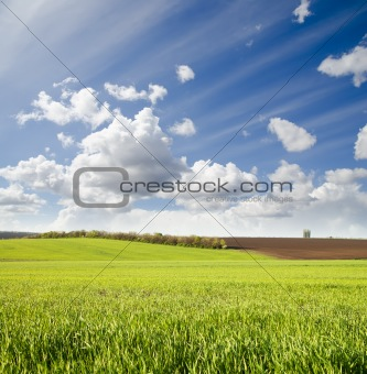green field under cloudy sky