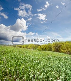 green grass near wood