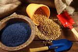 colored sowing seed