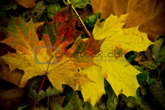 15 - Colorful autumn leaves