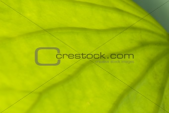 Abstract part of leaf 