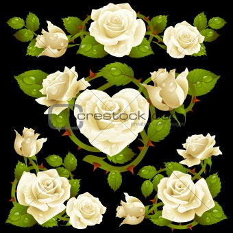 White Rose design elements