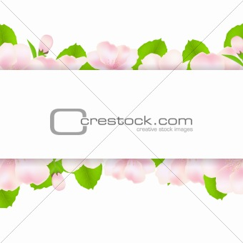 Apple Tree Flowers With Paper