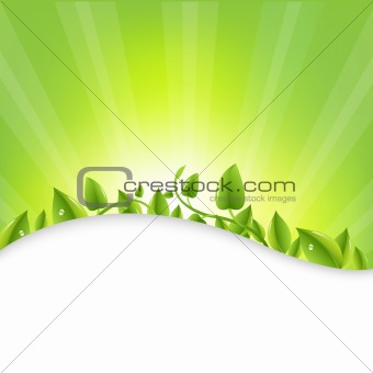 Green Leaves With Sunburst