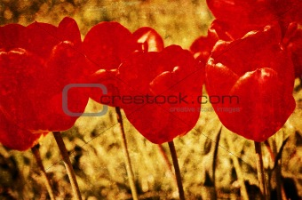 Grunge vintage background of flowers (tulips). Special ragged ef