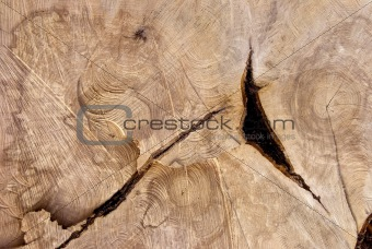 Cutting texture of old tree.