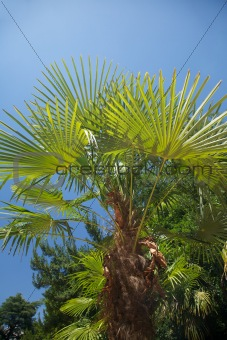 palm branch and leaf