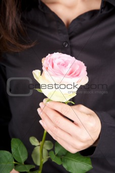 pink flower and black shirt background