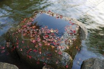 autumnal zen