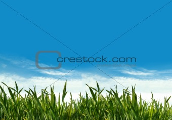 spring green grass field
