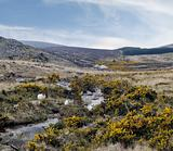 County Wicklow mountains, cheep