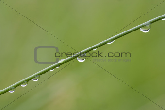 dew drops on the grass blade